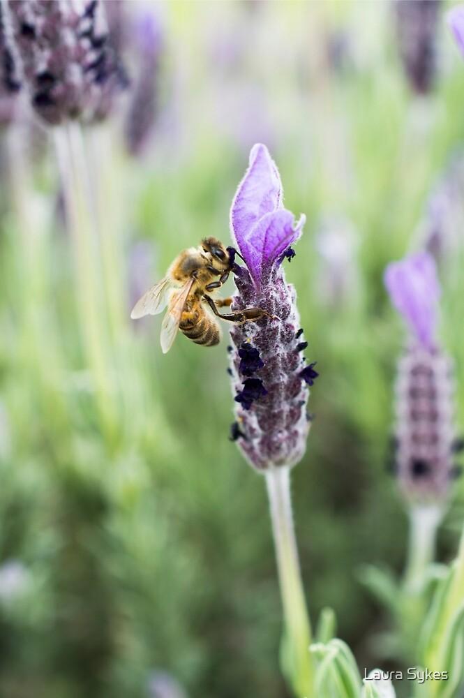 Lavender Honey by Laura Sykes
