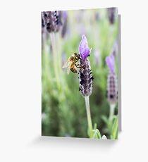 Lavender Honey Greeting Card