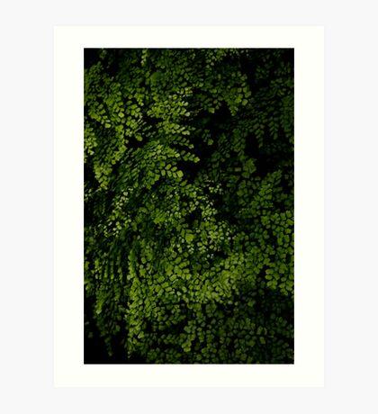 Small leaves.  Art Print