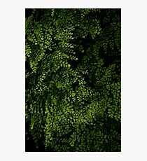 Small leaves.  Photographic Print