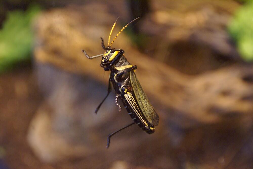 Beauty Bug by Jim Caldwell