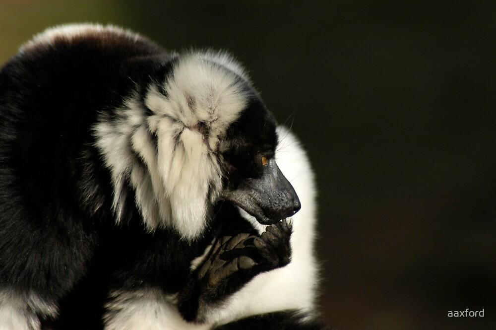 Lemur by aaxford