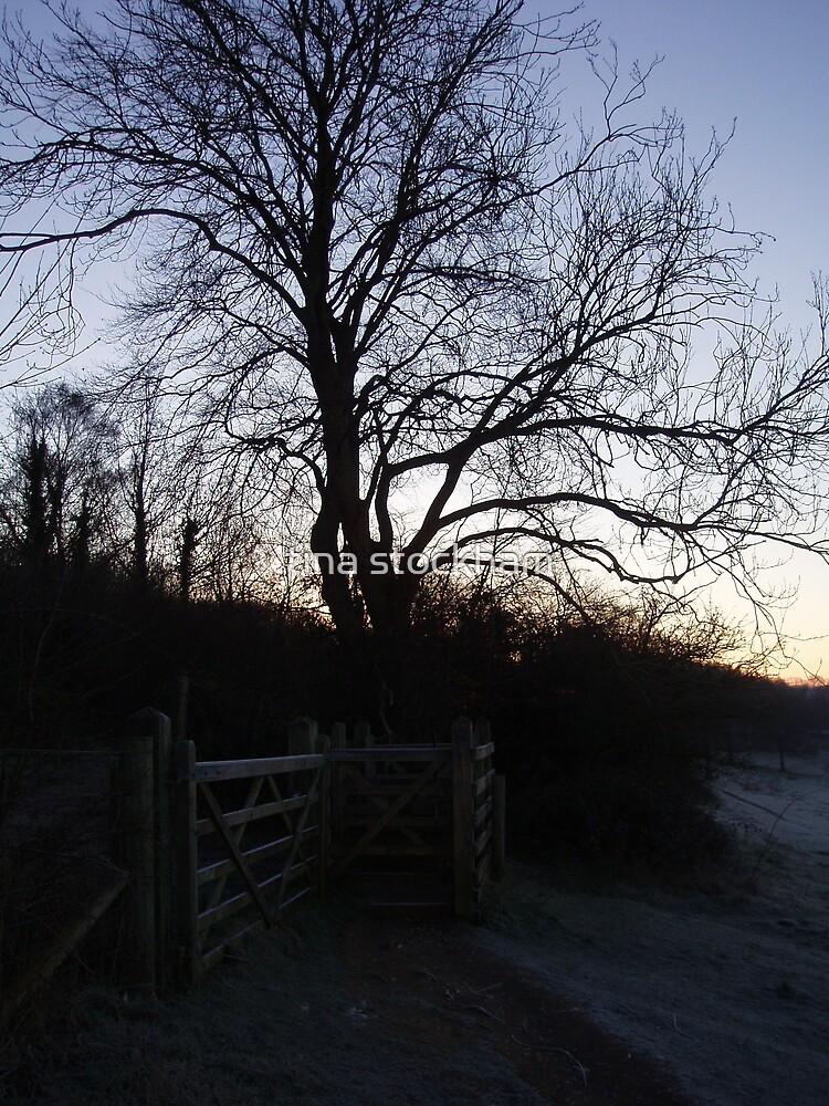 tree by tina stockham