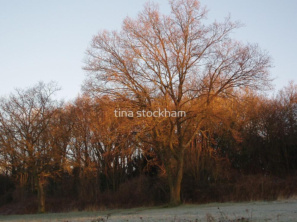 orange tree #1 by tina stockham
