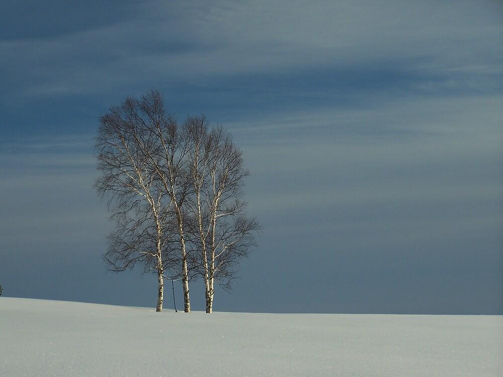 Winter Birch by Gene Cyr