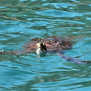 Loggerhead Sea Turtle by taiche