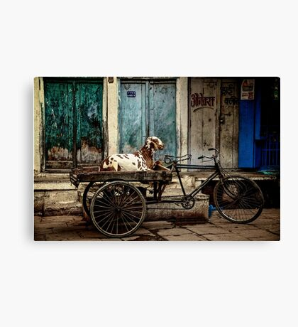 Goat on Wheels Canvas Print