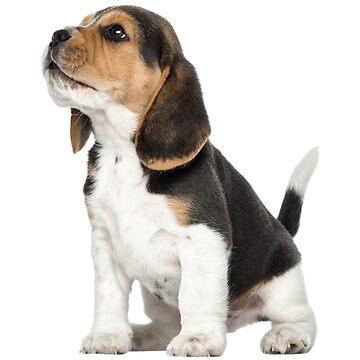cachorro beagle de storebycaste