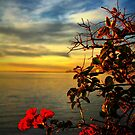 Morning Light by Barbara  Brown