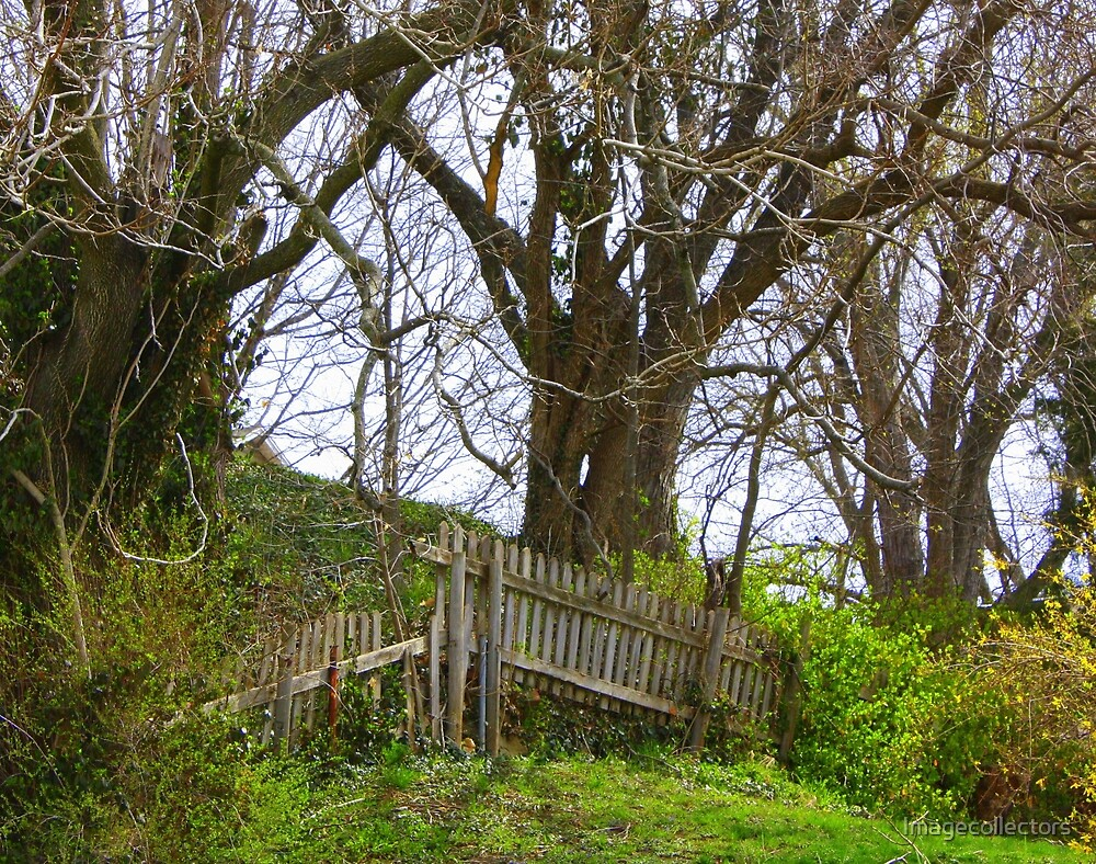 A gate in Weston by Imagecollectors