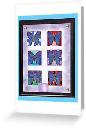 "Butterflies artfully ""framed"" by Thomas Josiah Chappelle"
