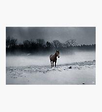 Quarterhorse in the Mist Photographic Print