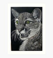 American Mountain Lion Art Print