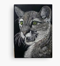 American Mountain Lion Canvas Print