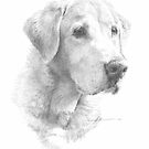 Old Yellow Lab drawing by Mike Theuer