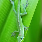 Green Anole on a Leaf Vertical by spottedelk