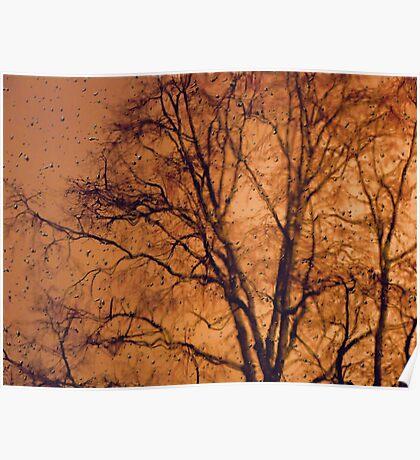 A Study Of A Tree No I Poster