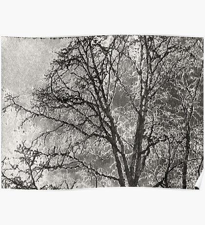 A Study Of A Tree No II Poster