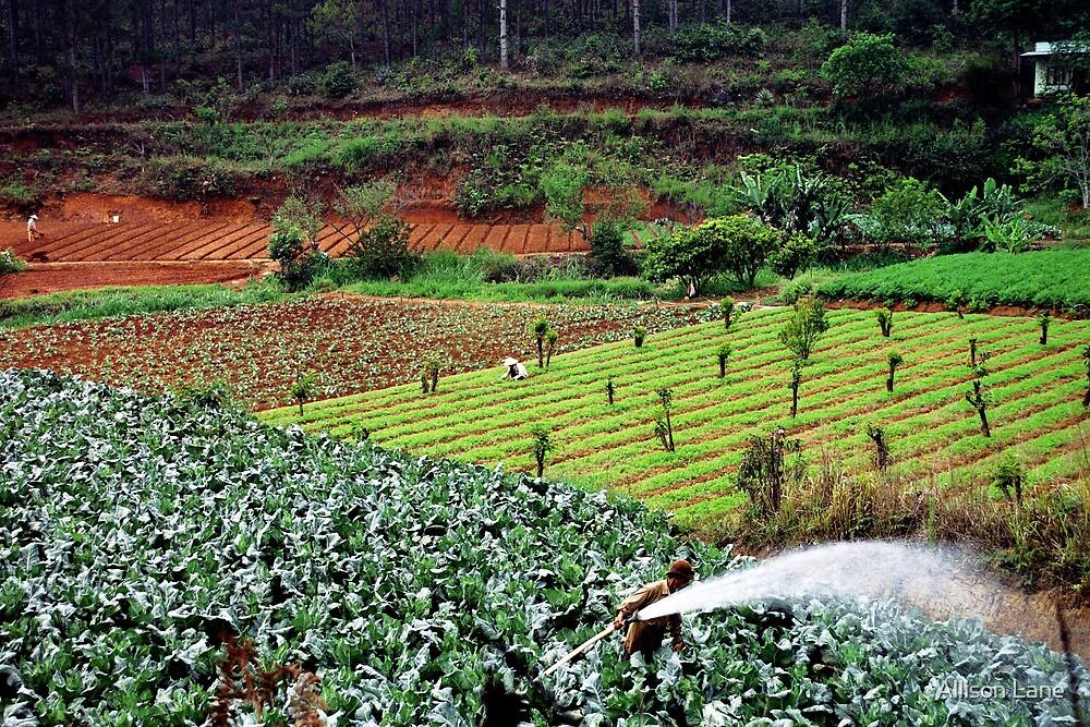 Farming the Fields by Allison Lane