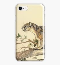 NATURAL HISTORY - Dinictis felina iPhone Case/Skin