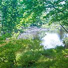 LAKE IN CLARK STATE FOREST by Pauline Evans