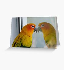 Tell me the truth, do I look fat in this! Sun Conure - NZ ** Greeting Card