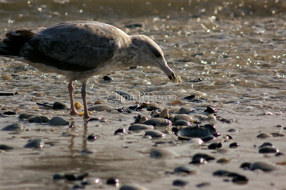 Seagull by Jimmy Burns