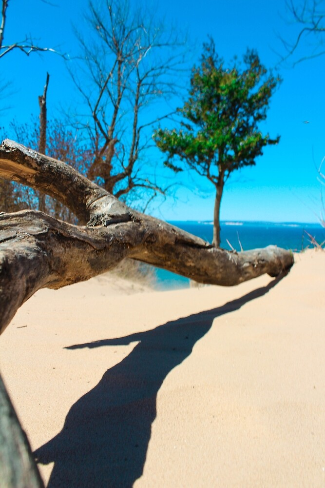 Tree Branch on Pyramid Point by S S Photography