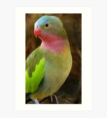 Do you like my Pastel Outfit! - Princess Parrot - NZ - Southland Art Print