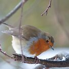 Robin in the Winter by ShirtsandShorts