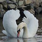 Majestic Swan by ShirtsandShorts