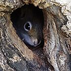 Squirrel Lookout by vette