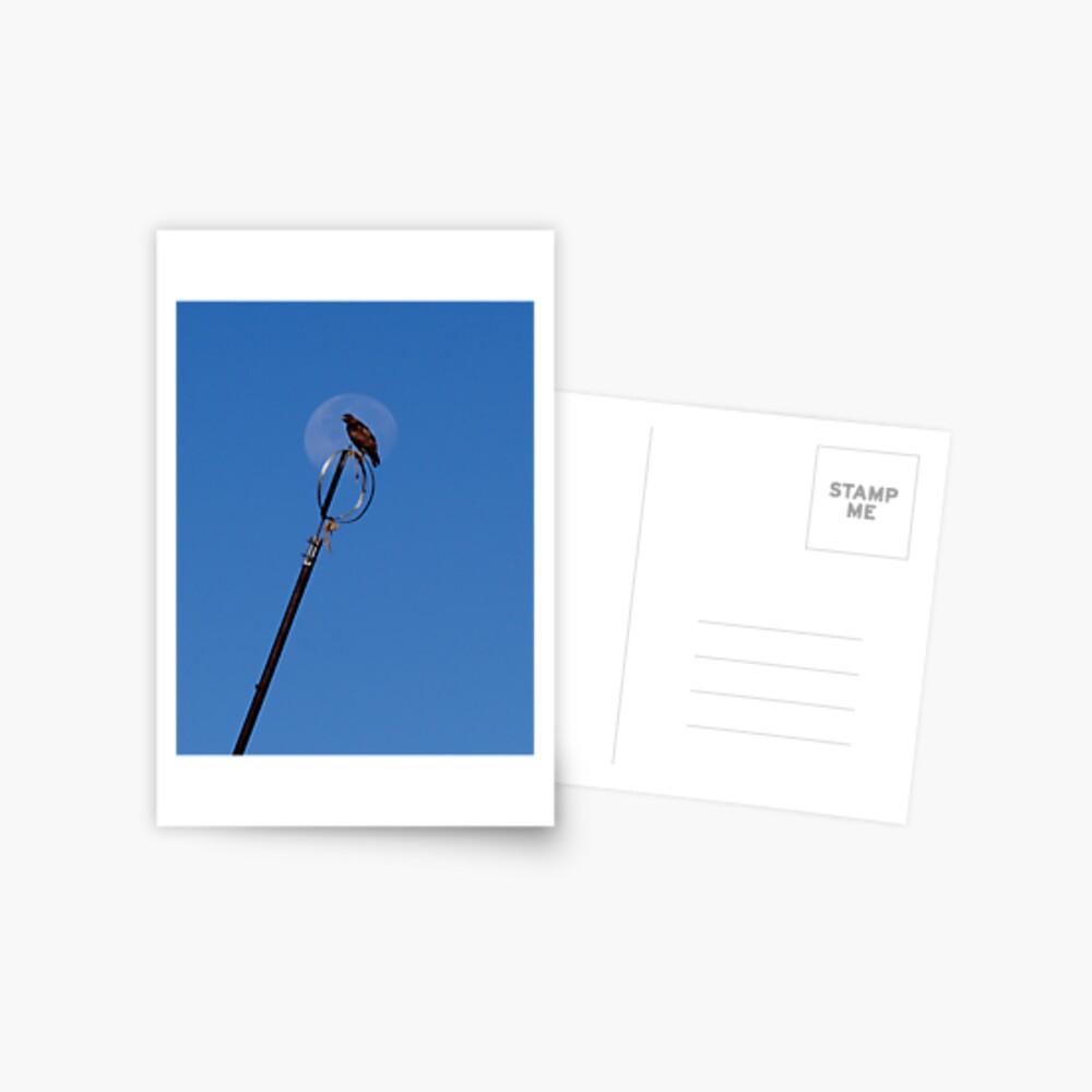 Moon Hawk Postcard