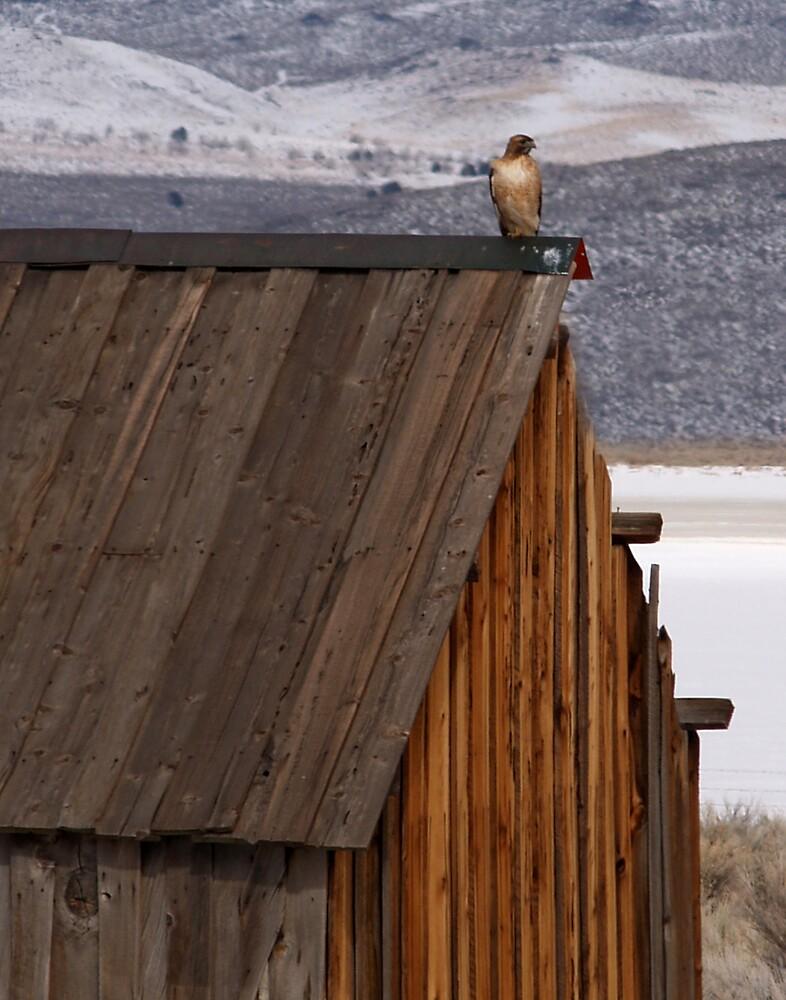 Rooftop Raptor by Jon  Johnson