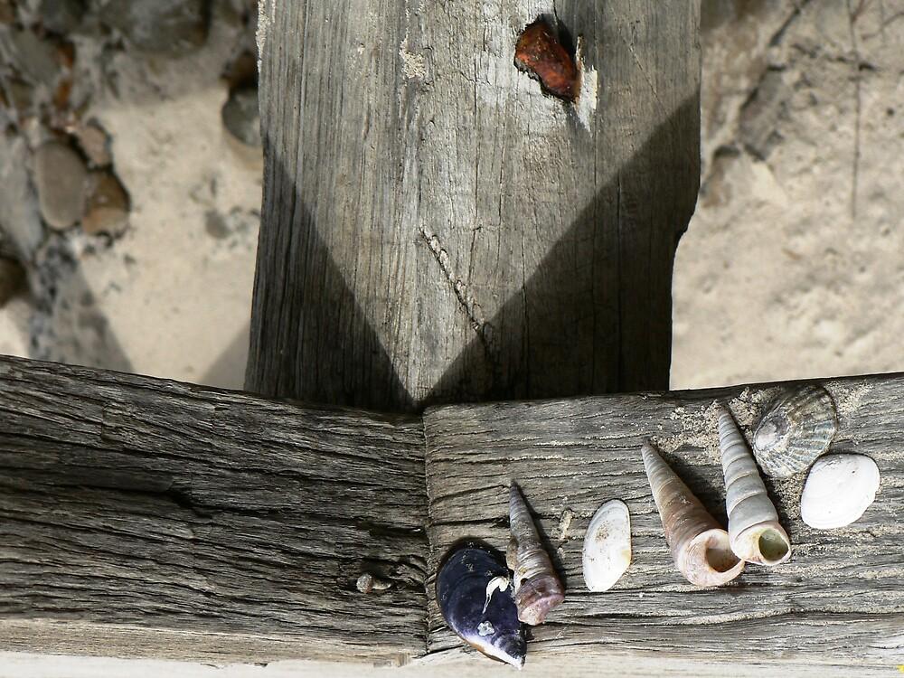 clems shells by Brett Harris