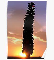 Good Morning Aloe Glory. Poster