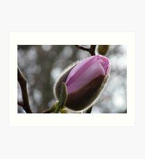 Ready to reveal her hidden beauty! - Magnolia - NZ Art Print