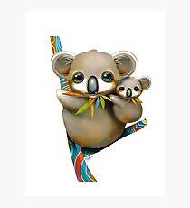 Koalas Photographic Print