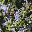 Bee and Rosemary by artddicted