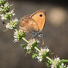 Orange Butterfly no. 1 by artddicted