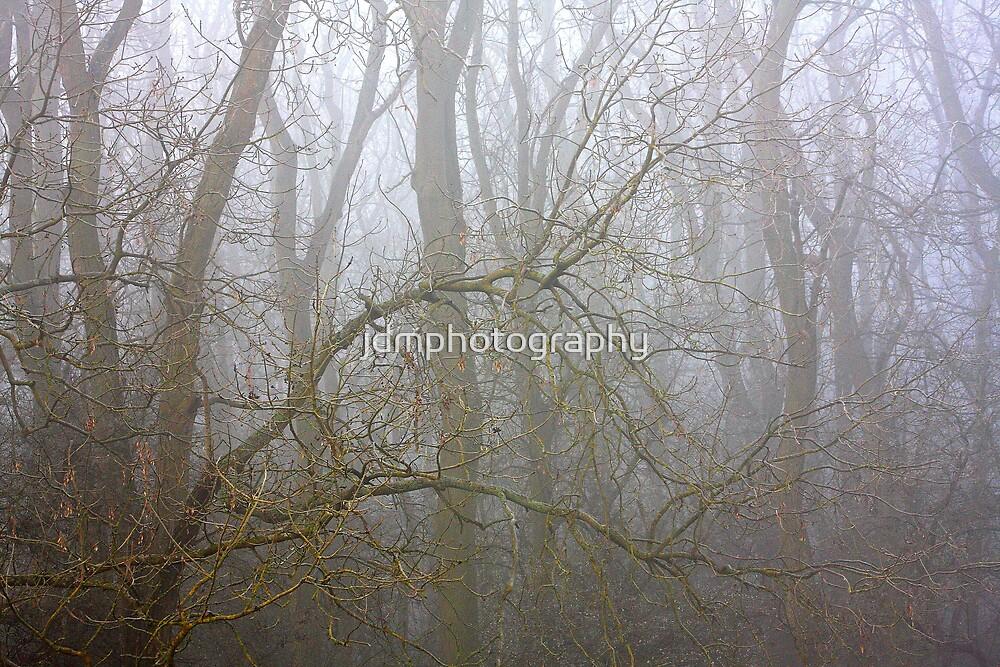 Woodland Fog by jdmphotography