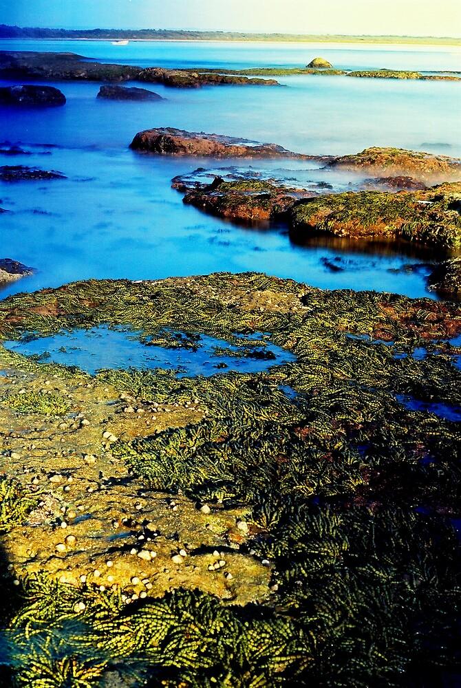 Rock Pool Currarong by Arran Pratt