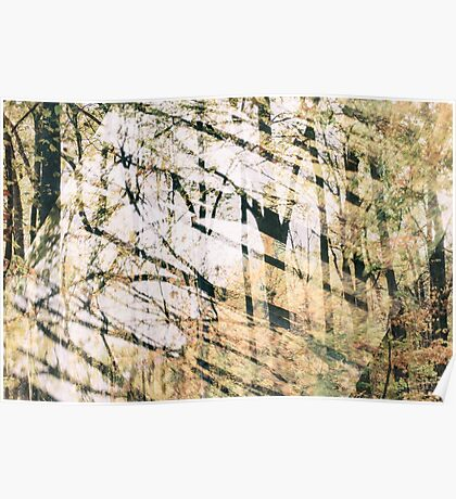 Abstract Autumn Woods Poster