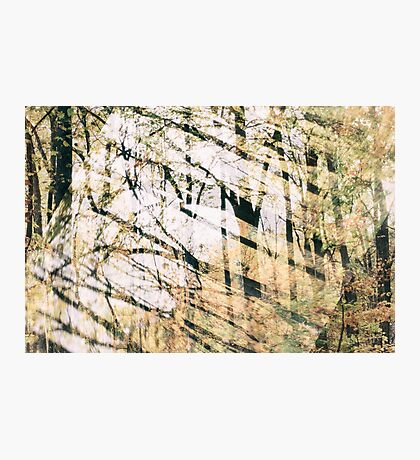 Abstract Autumn Woods Photographic Print