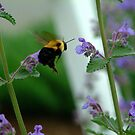 BEES RUSH IN by clou2