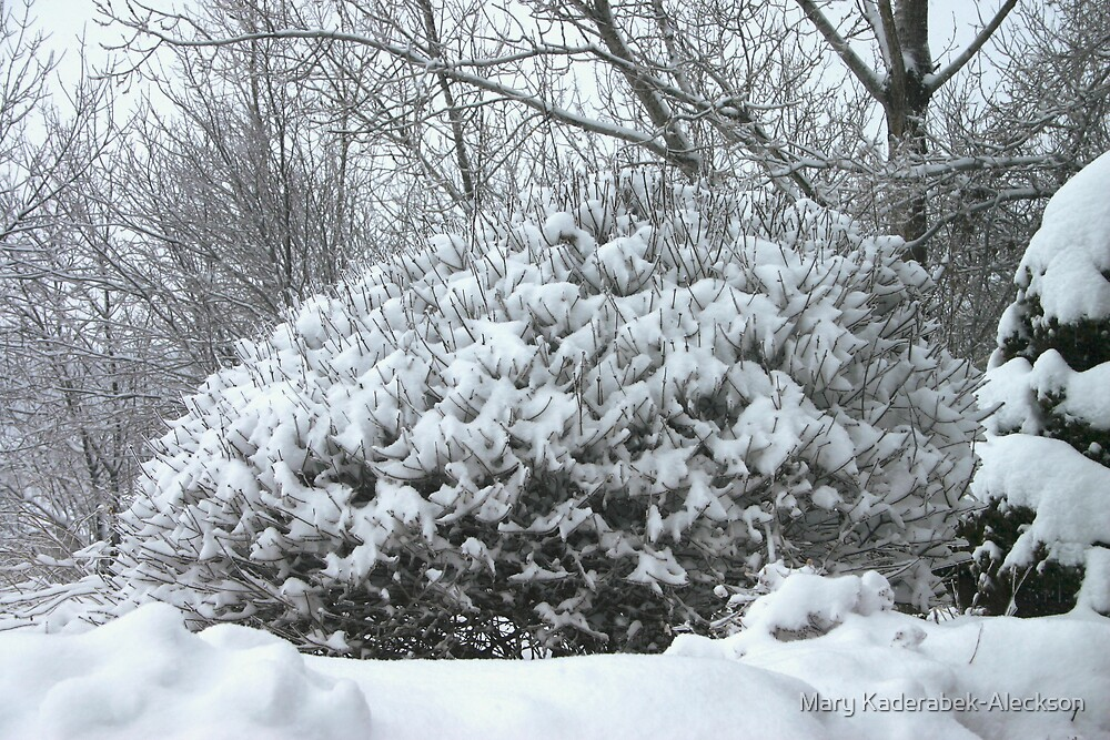 Snow Bush by Mary Kaderabek-Aleckson