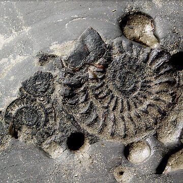 fossil by Kacholek