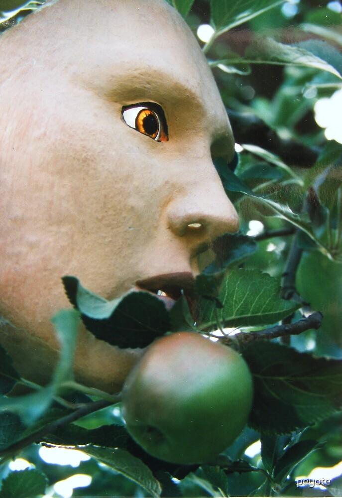 apple tree by peyote
