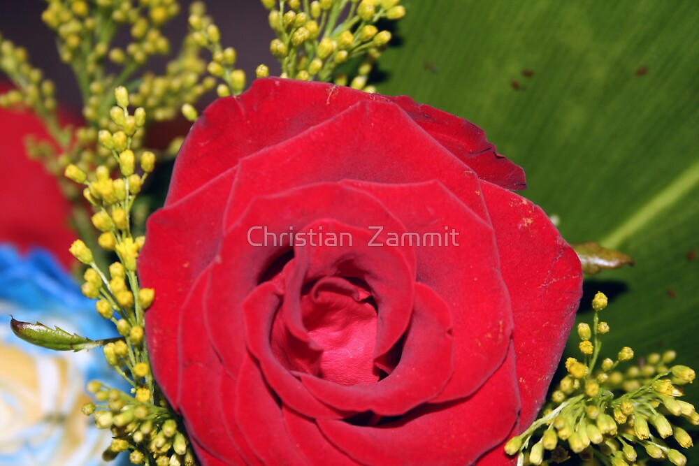 The Red Rose by Christian  Zammit