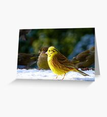 Glad the sun came out! - Yellow Hammer - NZ - Southland Greeting Card